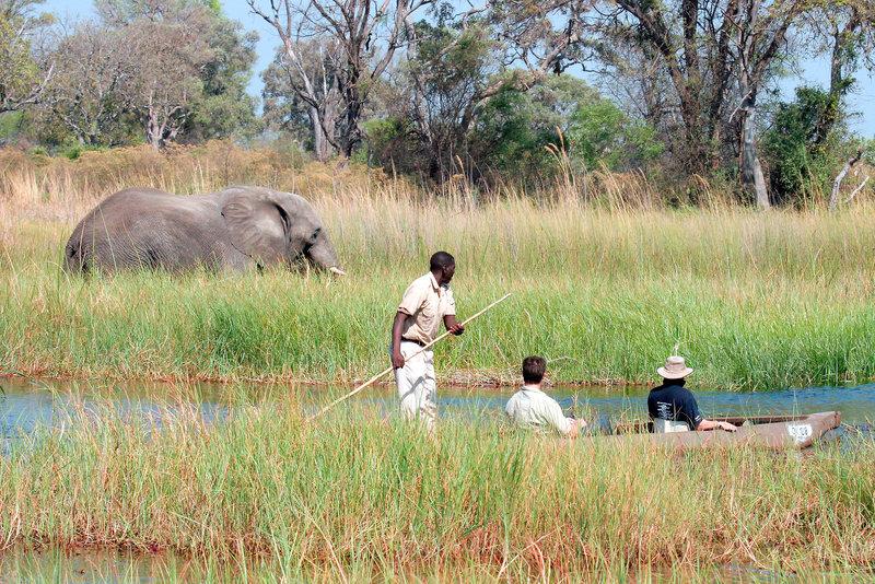 gunn-s-camp-botswana-park-narodowy-okavango-delta-lobby.jpg