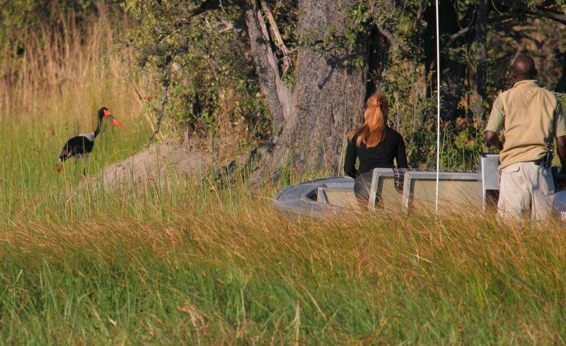 gunn-s-camp-botswana-park-narodowy-okavango-delta-plaza.jpg