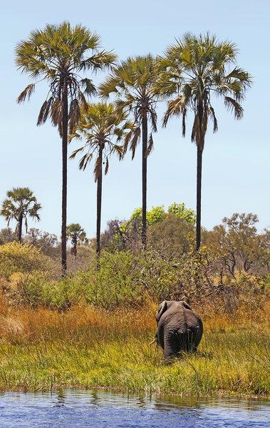 gunn-s-camp-botswana-park-narodowy-okavango-delta-pokoj.jpg
