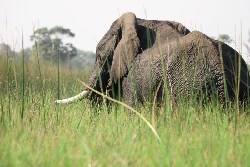 gunn-s-camp-botswana-park-narodowy-okavango-delta-recepcja.jpg