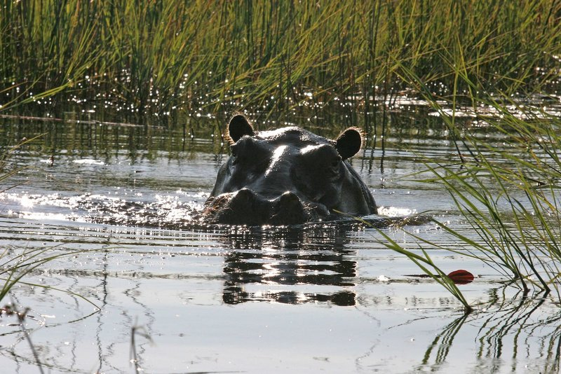 gunn-s-camp-botswana-park-narodowy-okavango-delta-restauracja.jpg